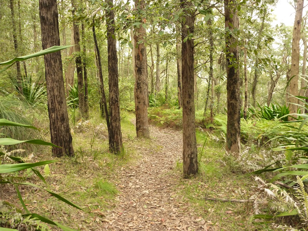 Forest near the summit of Mt Sugarloaf