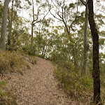 Track near Newcastle on Mt Sugarloaf (324515)