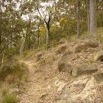 Rocky track near Mt Sugarloaf (324719)