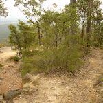Western viewpoint near Mt Sugarloaf (324734)
