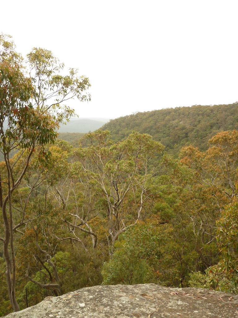 Views of forest near Mt Sugarloaf