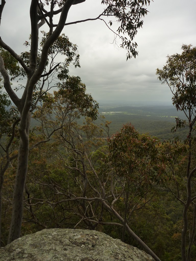 Forest and views behind near Mt Sugarloaf