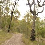 Track through forest near Mt Sugarloaf (325136)