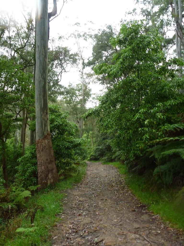 Rosemead Trail (325385)