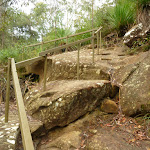 Steps on the Blue Gum walk south of Fishponds