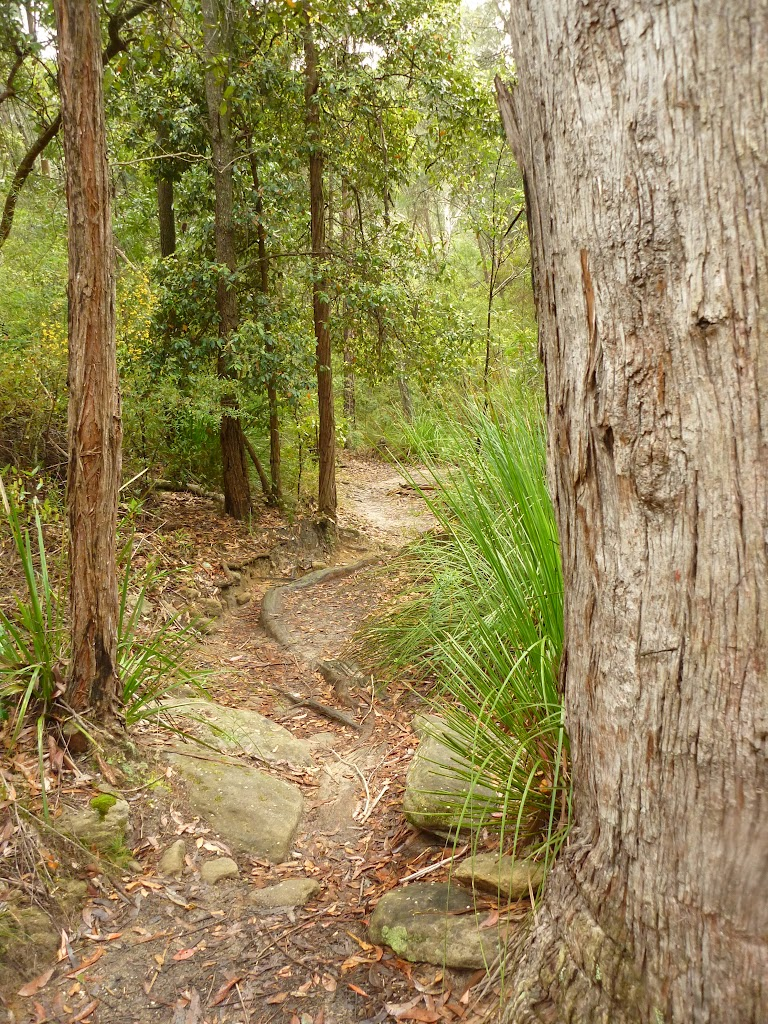 Blue Gum walk just south of Fishponds Lookout (325538)