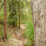 Blue Gum walk just south of Fishponds Lookout