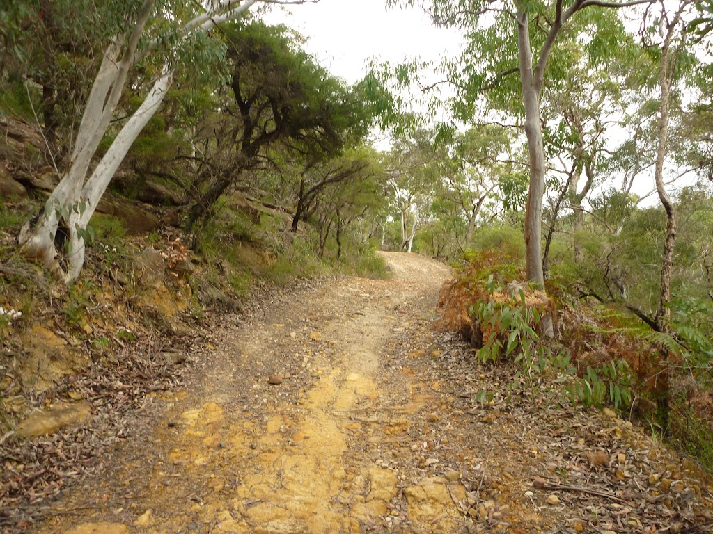 Tunks Ridge Trail