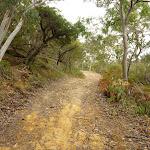 Tunks Ridge Trail (326681)