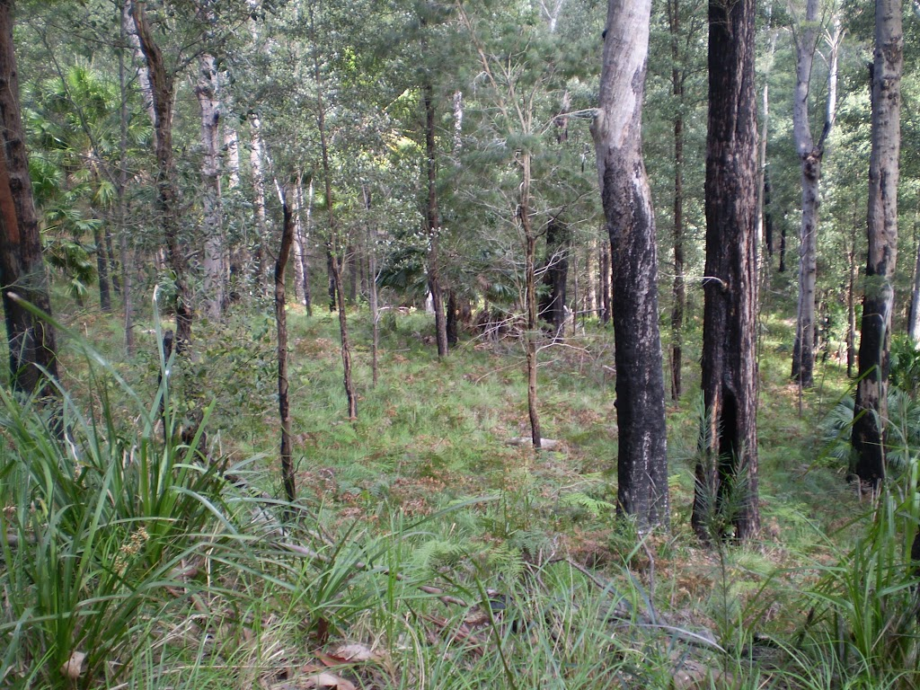 The southern edge of the forest