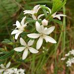 Wildflowers in bloom (327860)