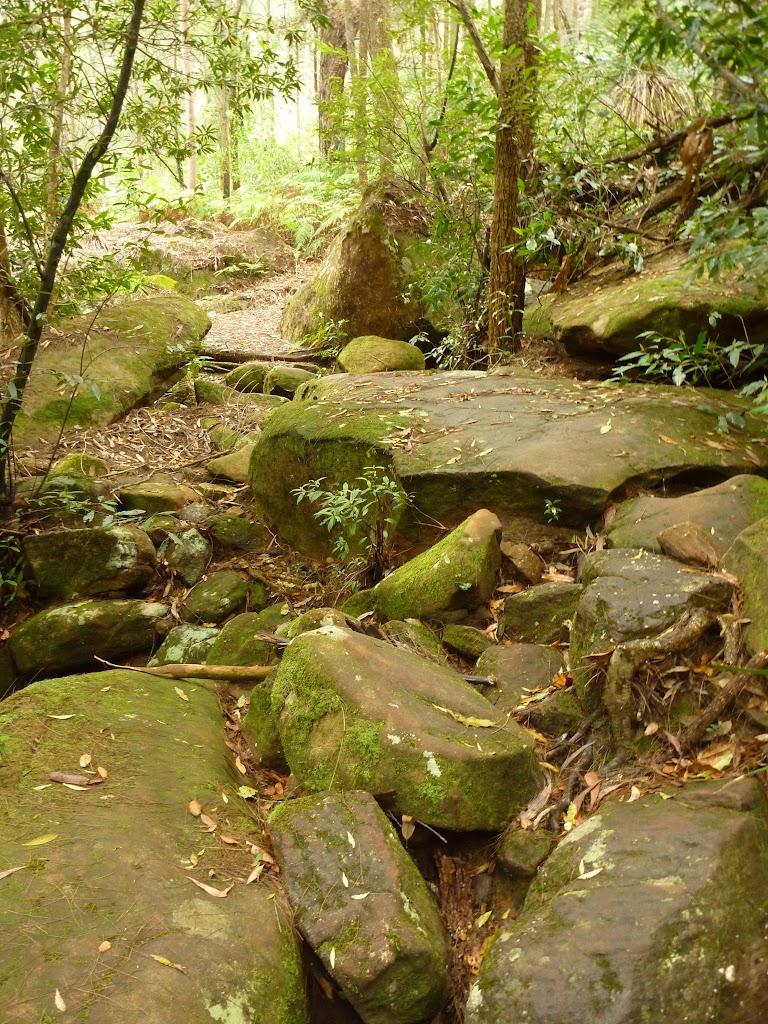 Crossing a mossy gully