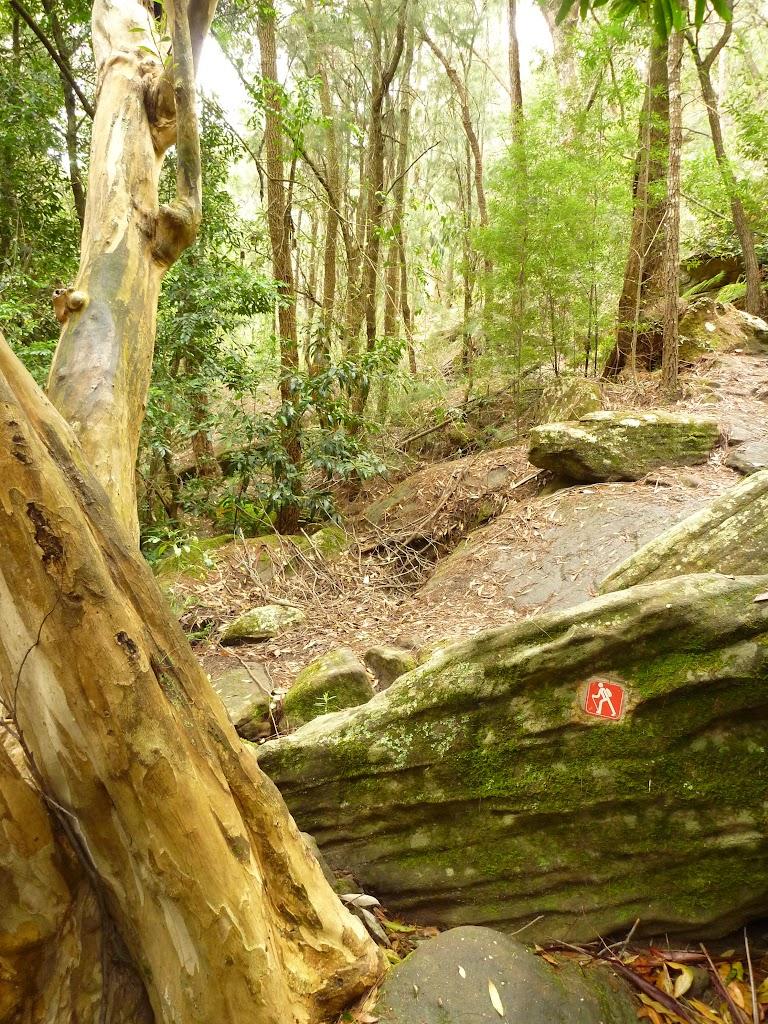 GNW arrow marker in dense moist forest