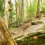 GNW arrow marker in dense moist forest (328013)