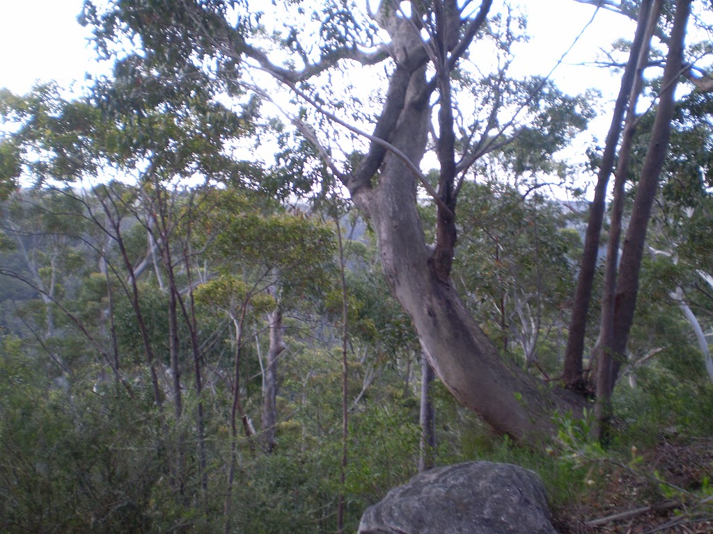 The view from the top of the hill