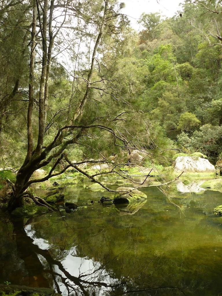 Berowra Creek north of Provest Creek