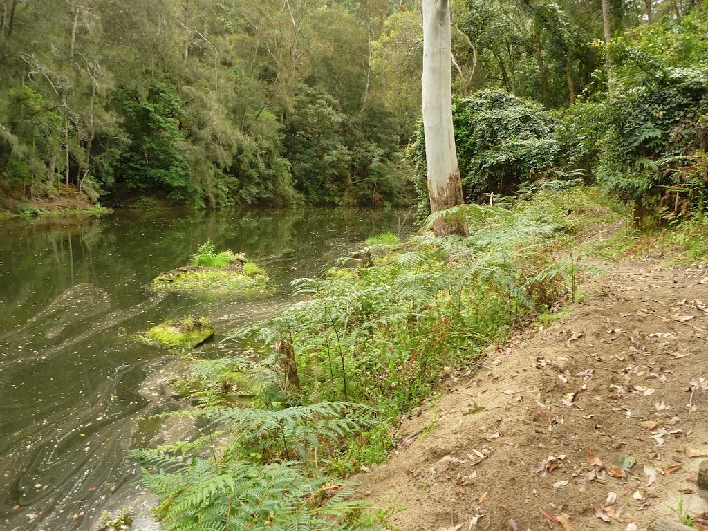 Sandy track beside Berowra Creek