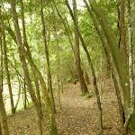 Pleasent forest near Berowra Creek campsite (329171)