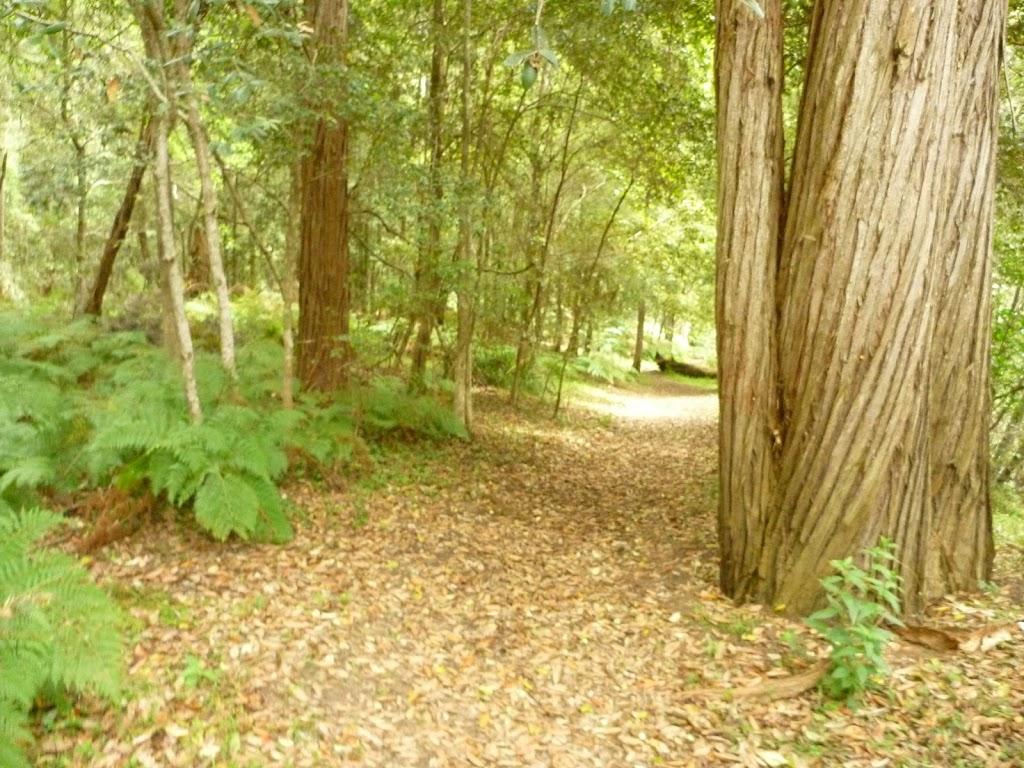 Track to Berowra Creek campsite