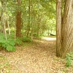 Track to Berowra Creek campsite (329252)