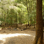 Berowra Creek campsite (329276)
