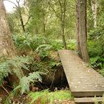 Bridge just east of Berowra Creek campsite (329297)