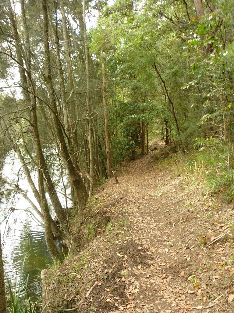 Walking beside Berowra Creek