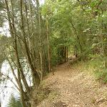 Walking beside Berowra Creek (329345)
