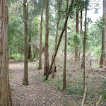 Open forest at northern Berowra Creek campsite (329450)
