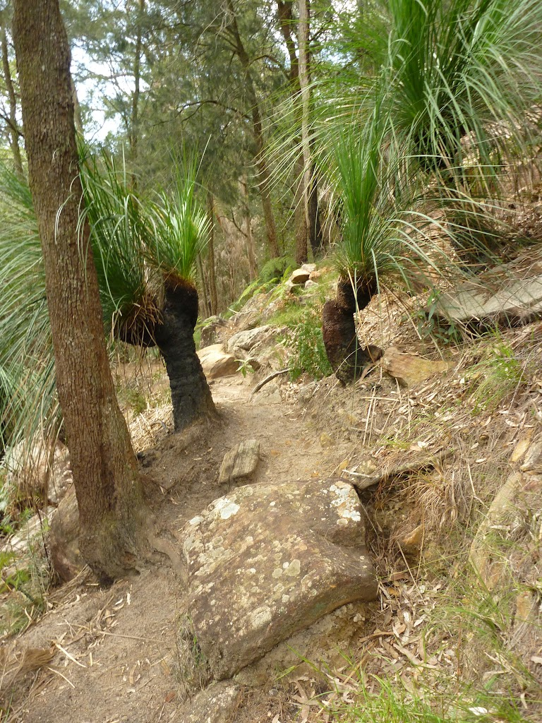 Grass trees and track beside Berowra Creek