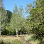 Flat marshland on south side of Sams Creek (331217)
