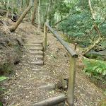 Steps north of Sams Creek (331430)