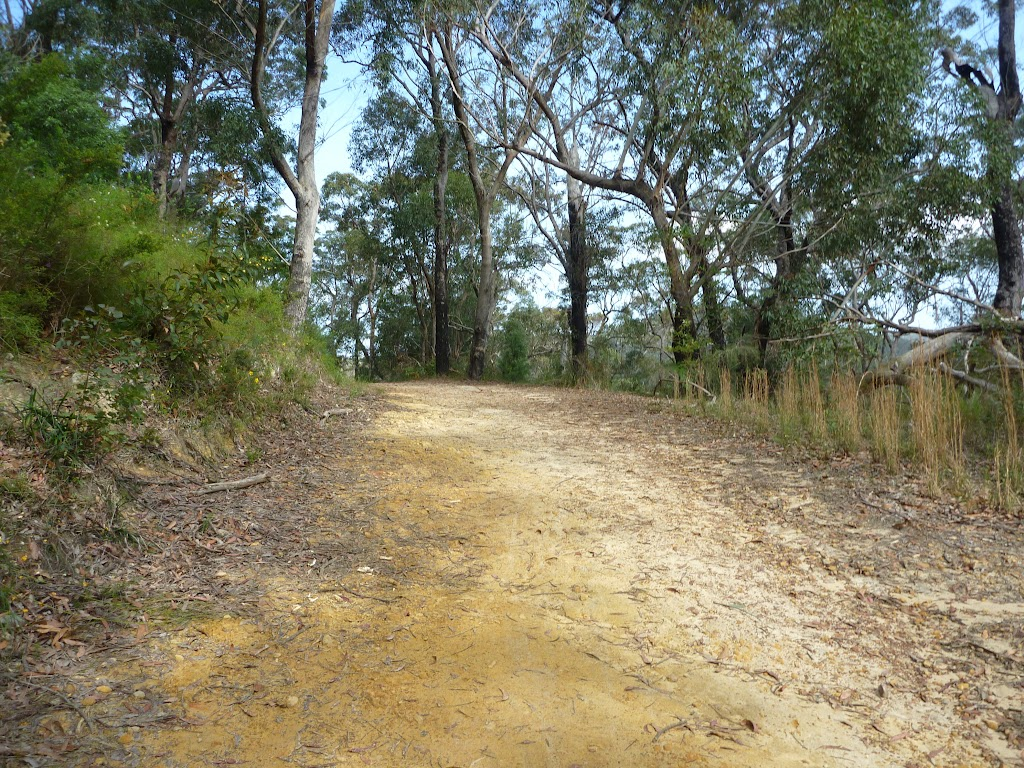 Walking along trail on south side of Berowra Heights
