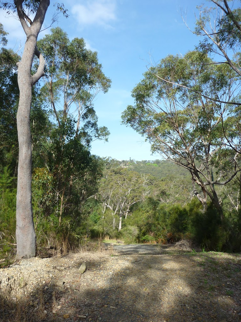 Trail west of Berowra