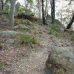 Quarry Rd track (332642)