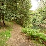 Walking alongside Waitara Creek (333002)