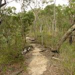 GNW west of Waitara Creek (333179)