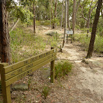 Int of the Great North Walk and the Blue Gum Walk (SW)