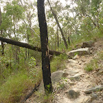 Rough rocky track in the Berowra Valley