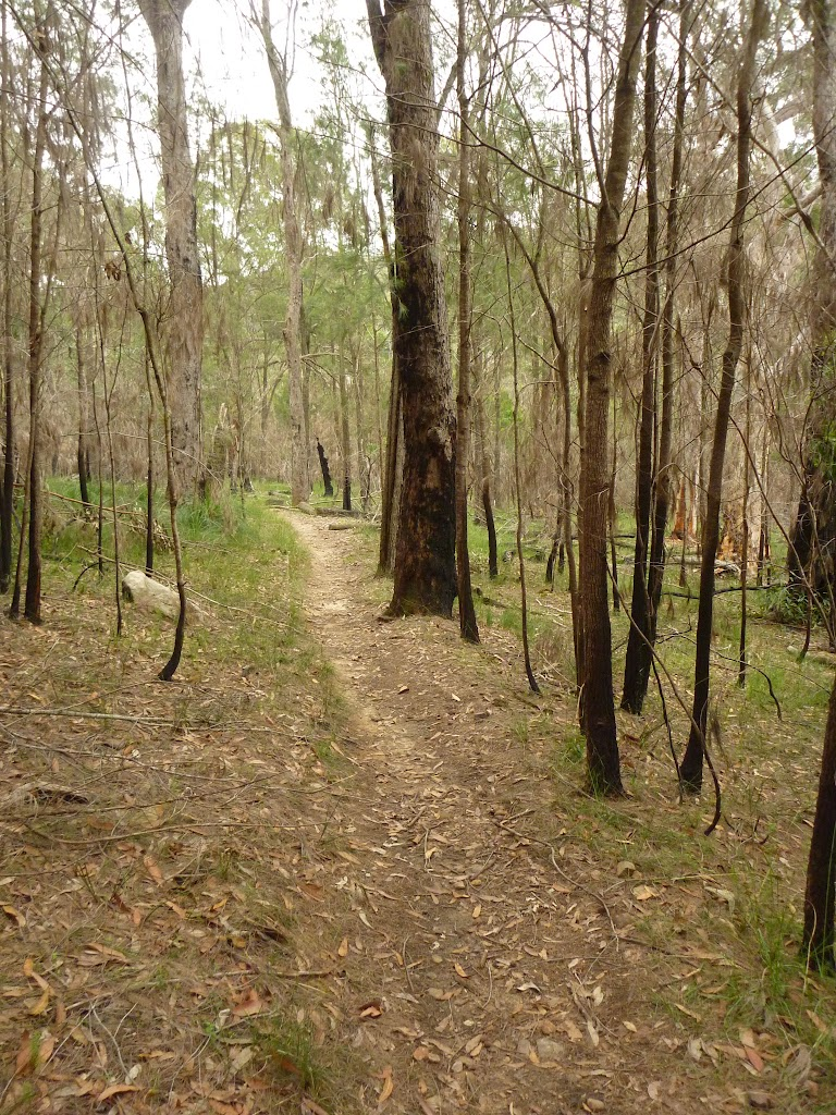 Walking through the open Casuarina forest (333620)