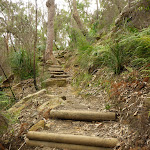 Climbing up the side of the Berowra Creek Valley