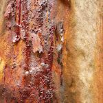 Tree trunk (333758)