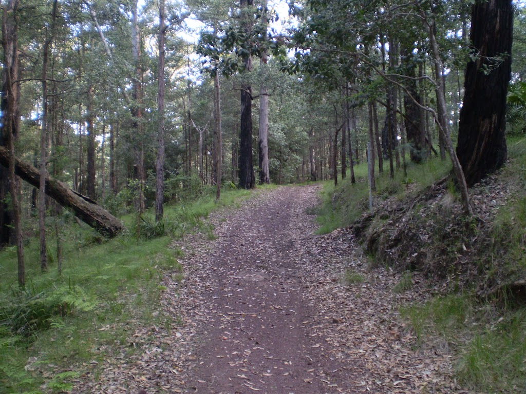 The Hacking River Firetrail