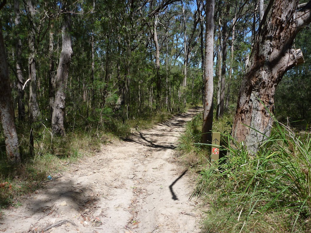 The Great North Walk track heading towards Newcastle