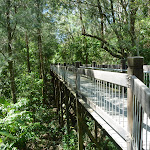 Tall Boardwalk (338404)