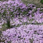 Wildflowers on Memorial Drive