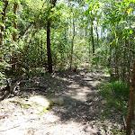 Bushland near the end of Boronia Ave (343882)