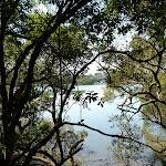 Lane Cove River (343939)