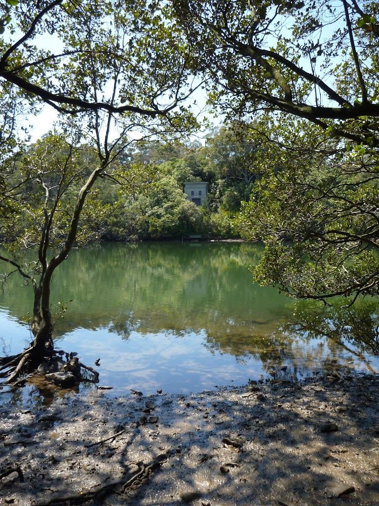 Lane Cove River from mangrove side trip