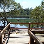 Mangrove viewing platform